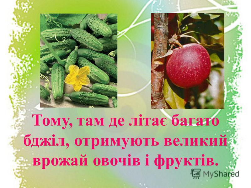 Тому, там де літає багато бджіл, отримують великий врожай овочів і фруктів.