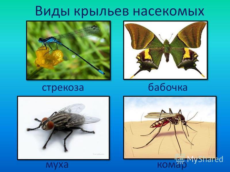 Виды крыльев насекомых стрекоза бабочка муха комар
