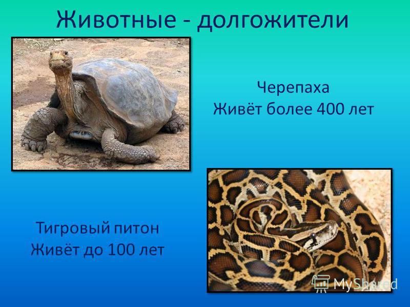 Животные - долгожители Черепаха Живёт более 400 лет Тигровый питон Живёт до 100 лет