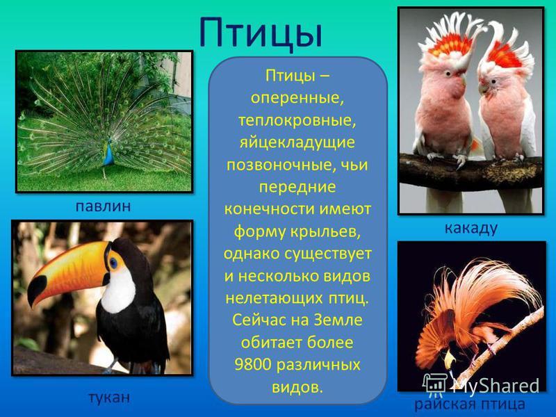 Птицы Птицы – оперенные, теплокровные, яйцекладущие позвоночные, чьи передние конечности имеют форму крыльев, однако существует и несколько видов нелетающих птиц. Сейчас на Земле обитает более 9800 различных видов. павлин тукан какаду райская птица