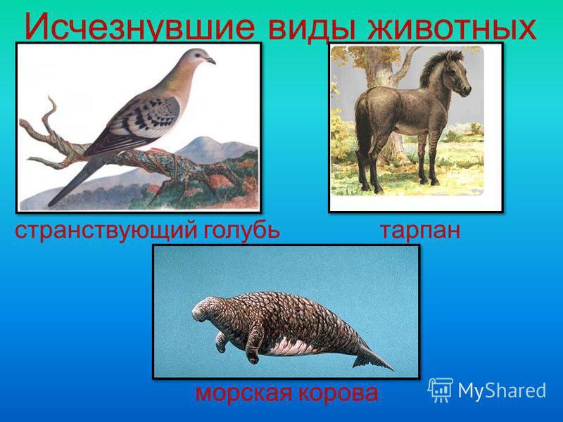 Исчезнувшие виды животных странствующий голубь тарпан морская корова