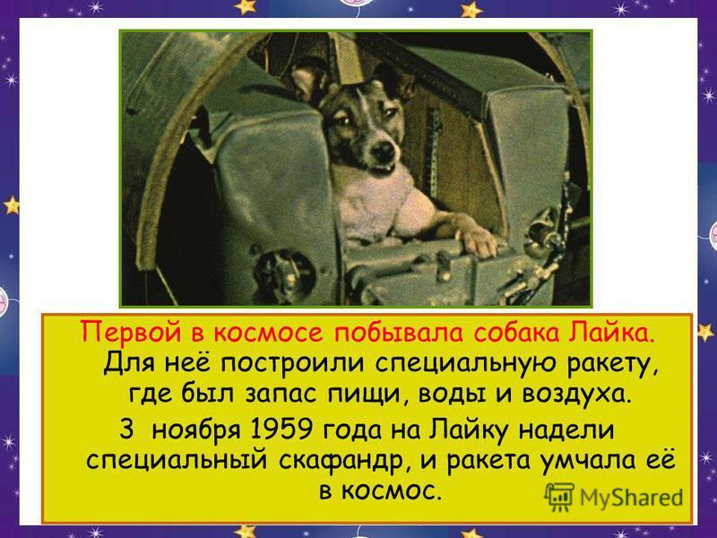 Первой в космосе побывала собака Лайка. Для неё построили специальную ракету, где был запас пищи, воды и воздуха. 3 ноября 1959 года на Лайку надели специальный скафандр, и ракета умчала её в космос.