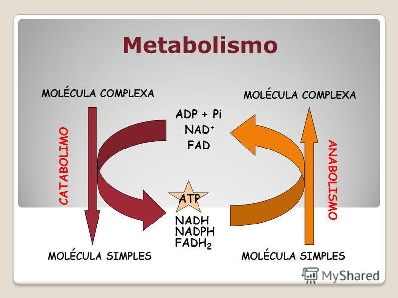 Metabolismo MOLÉCULA COMPLEXA MOLÉCULA SIMPLES CATABOLIMO NADH FADH 2 ATP NAD + FAD ADP + Pi NADPH MOLÉCULA COMPLEXA MOLÉCULA SIMPLES ANABOLISMO