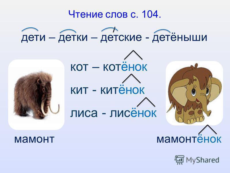 Чтение слов с. 104. кот – котонок кит - китонок лиса - лисонок дети – детки – детские - детоныши мамонт мамонтонок