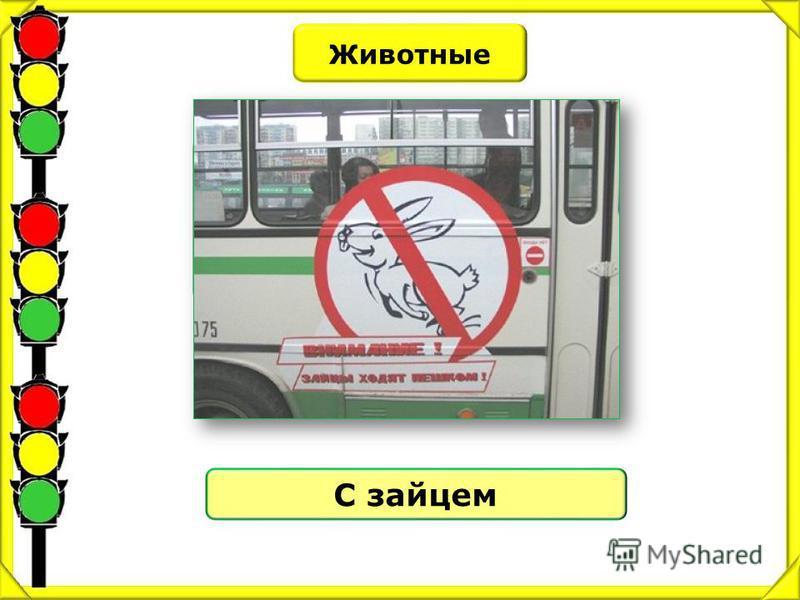 Животные С каким животным сравнивают пассажира – безбилетника? С зайцем