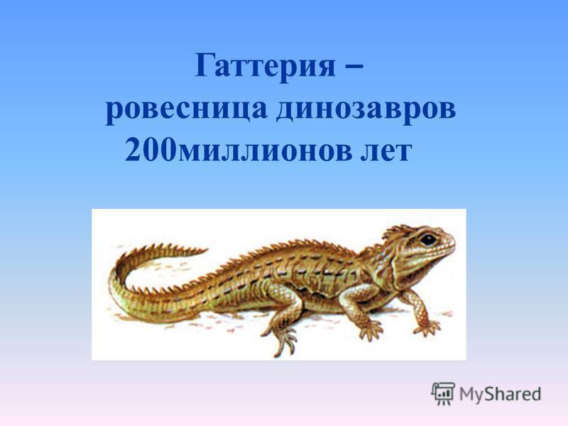 Гаттерия – ровесница динозавров 200 миллионов лет