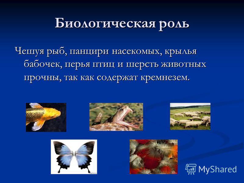 Биологическая роль Чешуя рыб, панцири насекомых, крылья бабочек, перья птиц и шерсть животных прочны, так как содержат кремнезем.