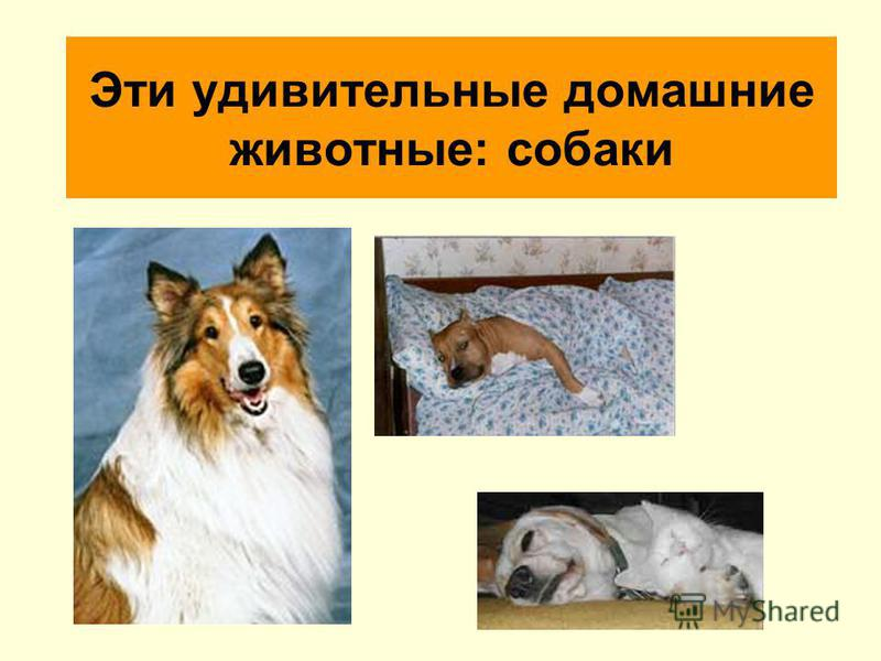 Эти удивительные домашние животные: собаки