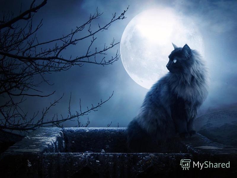 Луна как известно таит в себе огромный магический потенциал. Ни для кого не секрет, что Луна в зависимости от ее фазы, обладает разными действиями на человека. Например, на растущую Луну выпадает время пробуждения природы. В этот период хорошо провод