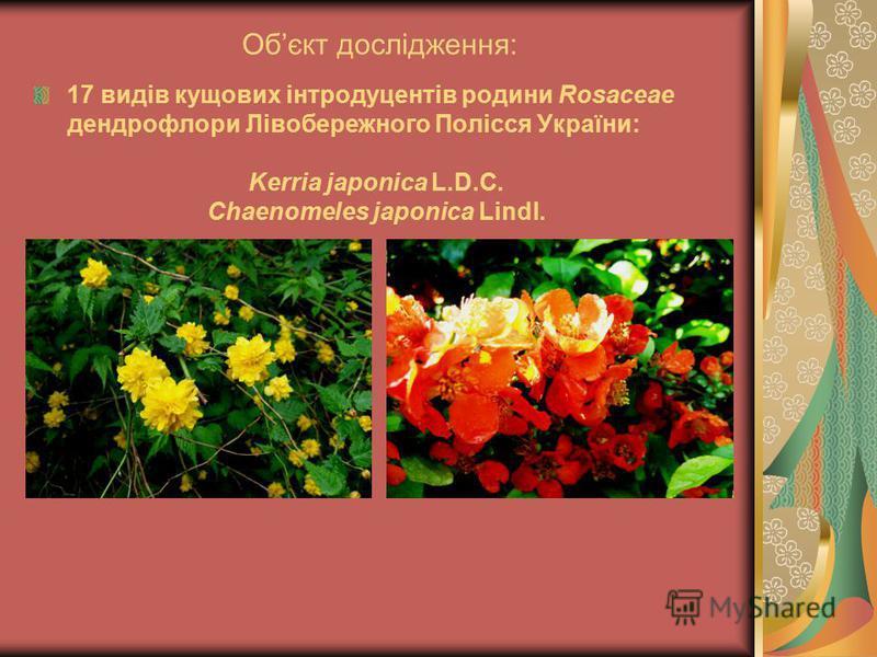 Обєкт дослідження: 17 видів кущових інтродуцентів родини Rosaceae дендрофлори Лівобережного Полісся України: Kerria japonica L.D.C. Chaenomeles japonica Lindl.