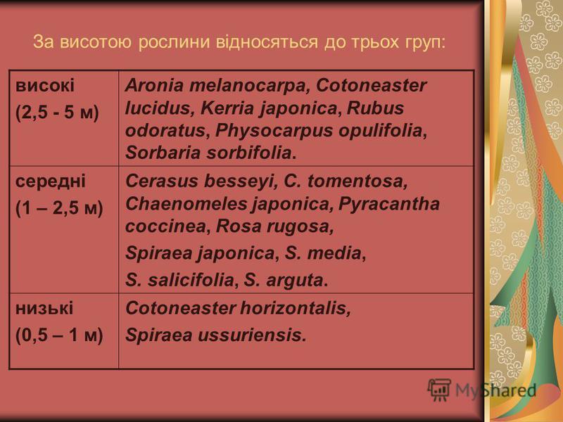 За висотою рослини відносяться до трьох груп: високі (2,5 - 5 м) Aronia melanocarpa, Cotoneaster lucidus, Kerria japonica, Rubus odoratus, Physocarpus opulifolia, Sorbaria sorbifolia. середні (1 – 2,5 м) Cerasus besseyi, С. tomentosa, Chaenomeles jap