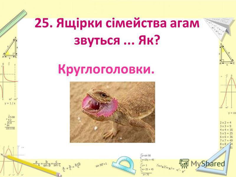 25. Ящірки сімейства агам звуться... Як? Круглоголовки.