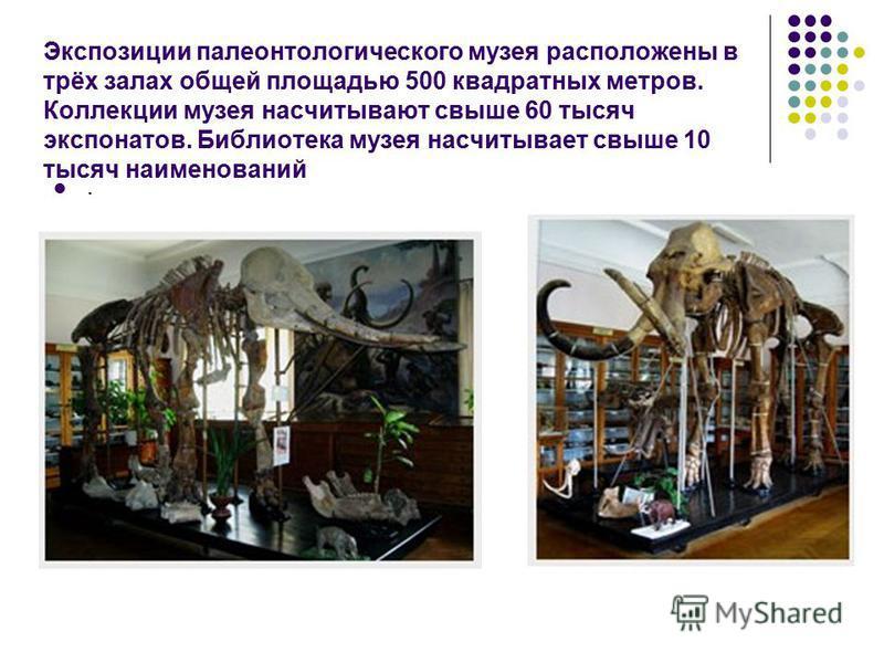 Музей содержит богатейшую региональную коллекцию ископаемых останков, собранных на юге Восточноевропейской платформы (Украина и Молдова), и уникальные коллекции ископаемой фауны и флоры, которые отсутствуют во многих других палеонтологических музеях