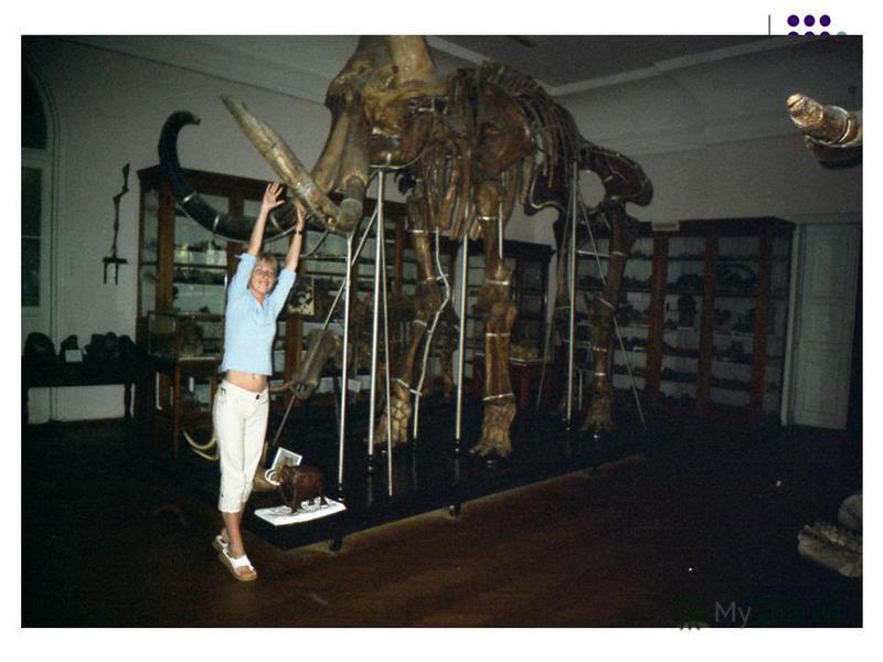 Одесский палеонтологический музей один из старейших в Украине. Появился он в Одессе в 1865 году.