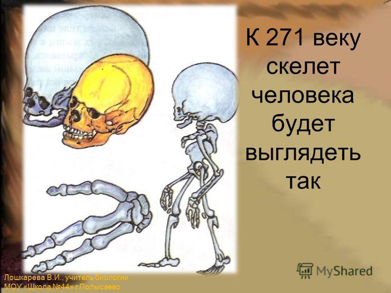 К 271 веку скелет человека будет выглядеть так Лошкарева В.И., учитель биологии МОУ «Школа 44» г.Полысаево