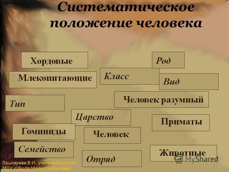 Систематическое положение человека Лошкарева В.И., учитель биологии МОУ «Школа 44» г.Полысаево