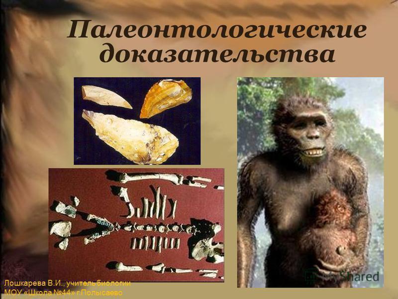 Палеонтологические доказательства Лошкарева В.И., учитель биологии МОУ «Школа 44» г.Полысаево