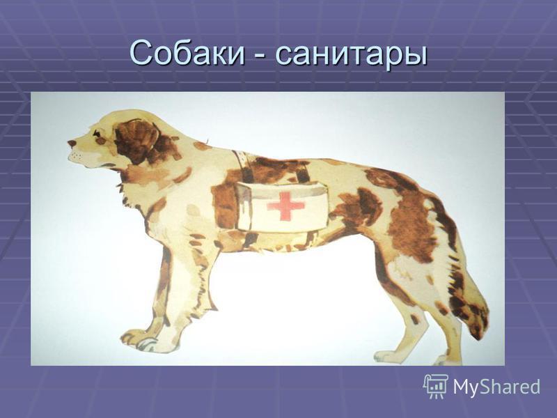 Собаки - санитары