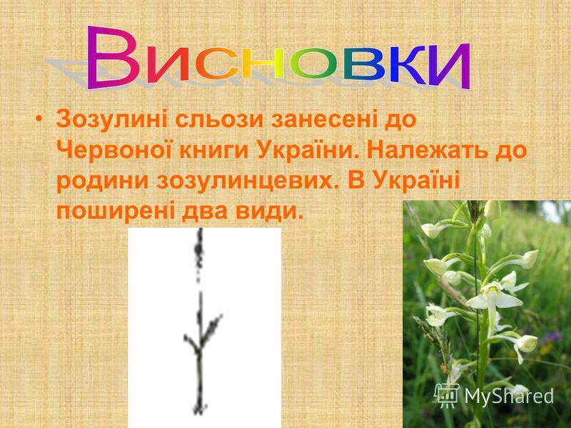 Зозулині сльози занесені до Червоної книги України. Належать до родини зозулинцевих. В Україні поширені два види.