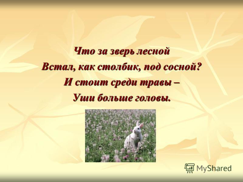 Что за зверь лесной Встал, как столбик, под сосной? И стоит среди травы – Уши больше головы.