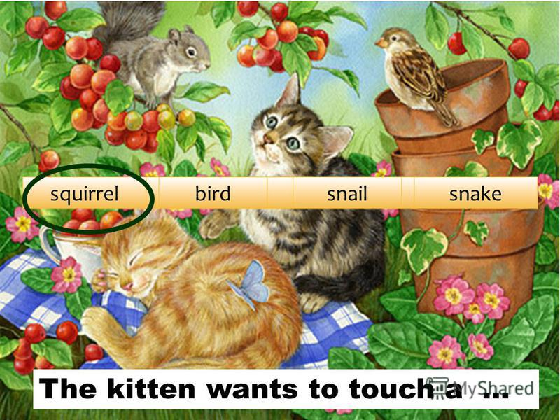squirrelbirdsnailsnake The kitten wants to touch a …