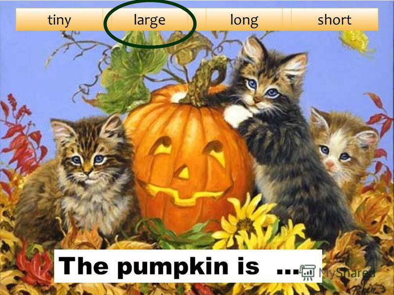 tinylargelongshort The pumpkin is …