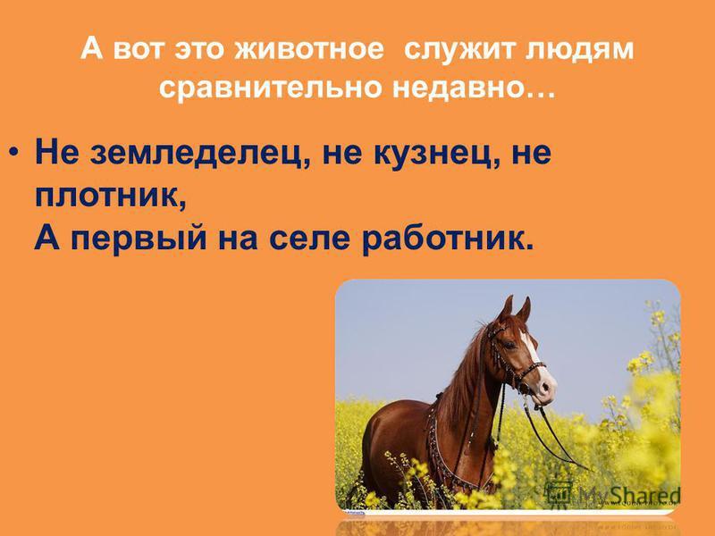 А вот это животное служит людям сравнительно недавно… Не земледелец, не кузнец, не плотник, А первый на селе работник.