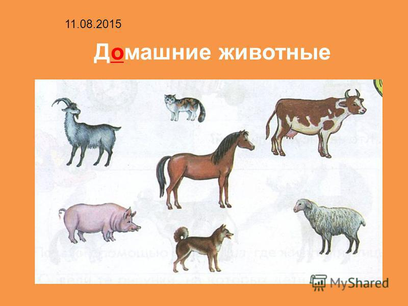 Домашние животные 11.08.2015