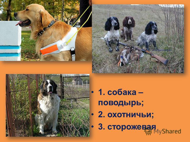 1. собака – поводырь; 2. охотничьи; 3. сторожевая
