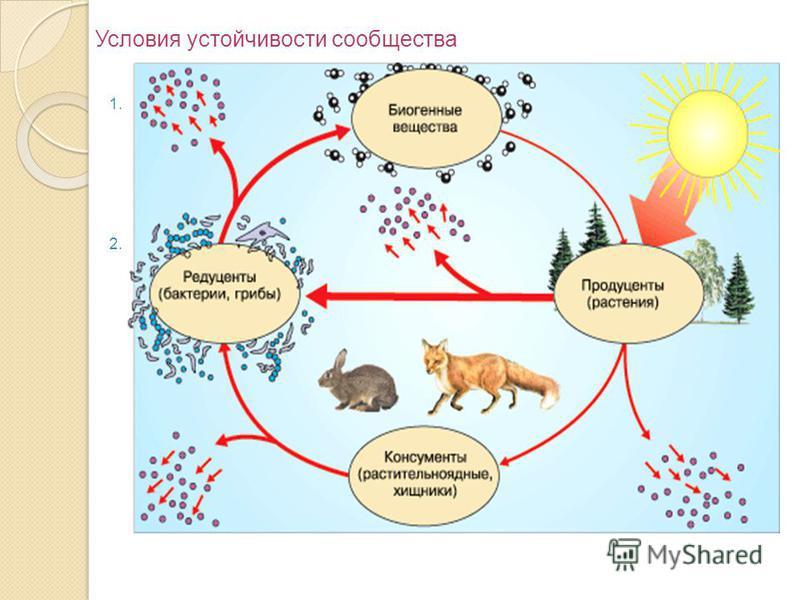 Условия устойчивости сообщества 1. Постоянный приток энергии из вне. Энергия не передаётся по замкнутому кругу, она доступна в форме солнечной радиации, которая связывается в процессе фотосинтеза. Расходуясь затем в виде химической энергии, она теряе