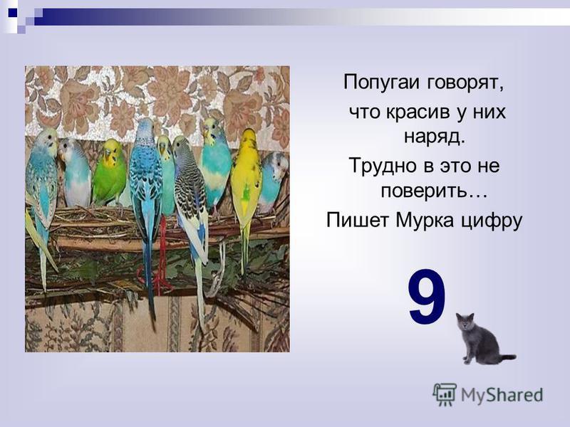 Попугаи говорят, что красив у них наряд. Трудно в это не поверить… Пишет Мурка цифру 9