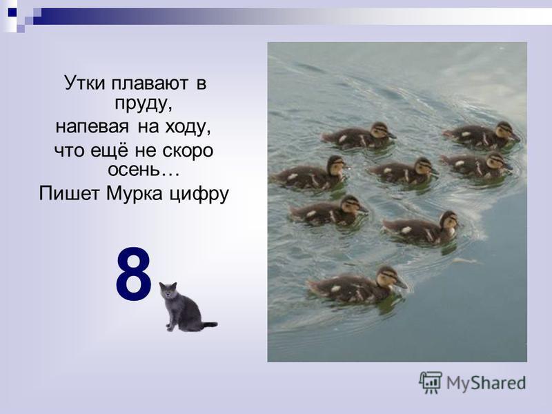 Утки плавают в пруду, напевая на ходу, что ещё не скоро осень… Пишет Мурка цифру 8
