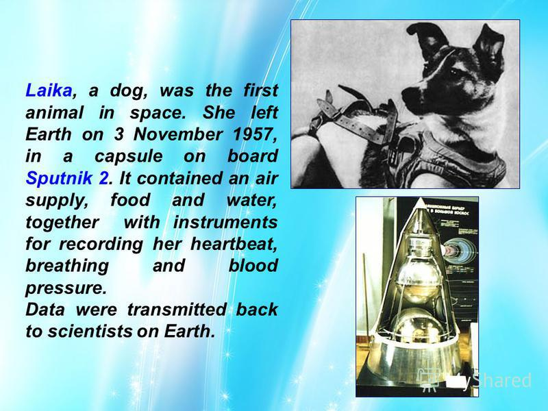 Laika, a dog, was the first animal in space. She left Earth on 3 November 1957, in a capsule on board Sputnik 2. It contained an air supply, food and water, together with instruments for recording her heartbeat, breathing and blood pressure. Data wer