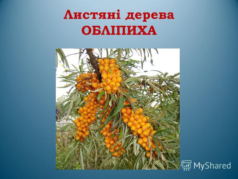 Листяні дерева ОБЛІПИХА