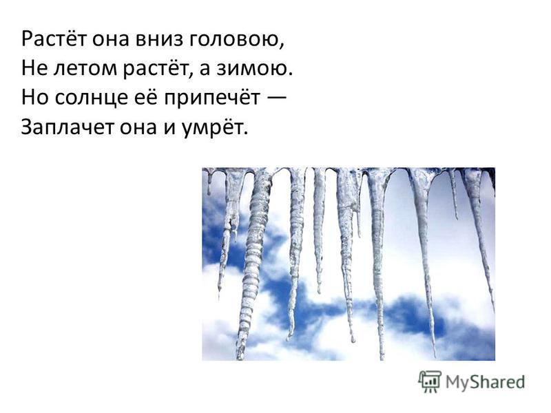 Растёт она вниз головою, Не летом растёт, а зимою. Но солнце её припечёт Заплачет она и умрёт.