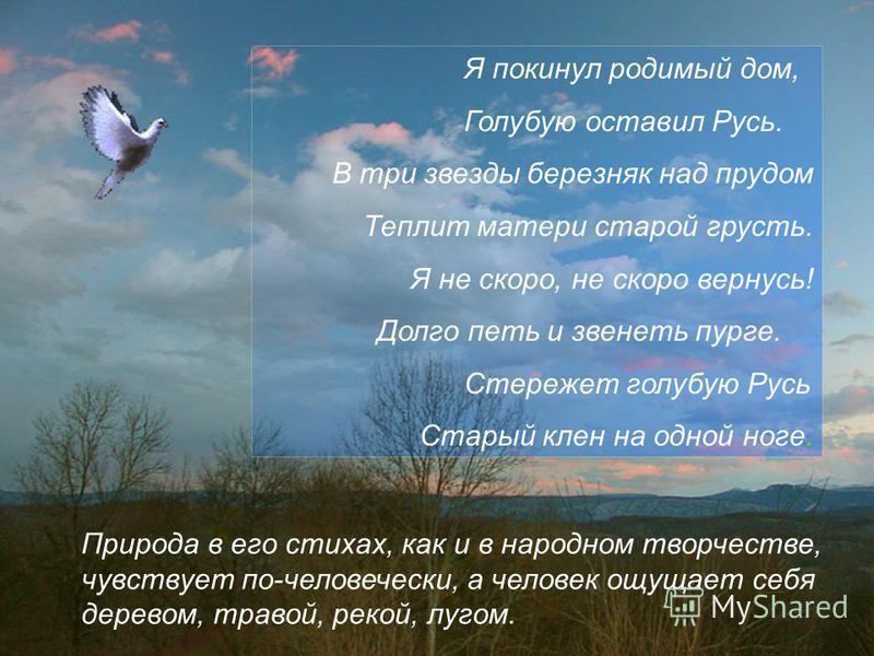 Природа в его стихах, как и в народном творчестве, чувствует по-человечески, а человек ощущает себя деревом, травой, рекой, лугом. Я покинул родимый дом, Голубую оставил Русь. В три звезды березняк над прудом Теплит матери старой грусть. Я не скоро,