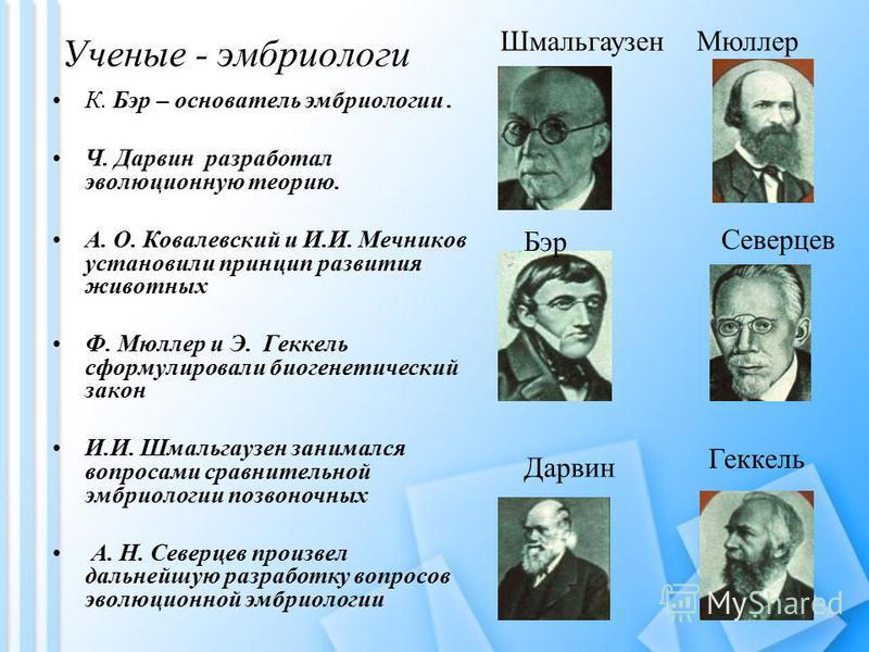 Ученые - эмбриологи К. Бэр – основатель эмбриологии. Ч. Дарвин разработал эволюционную теорию. А. О. Ковалевский и И.И. Мечников установили принцип развития животных Ф. Мюллер и Э. Геккель сформулировали биогенетический закон И.И. Шмальгаузен занимал