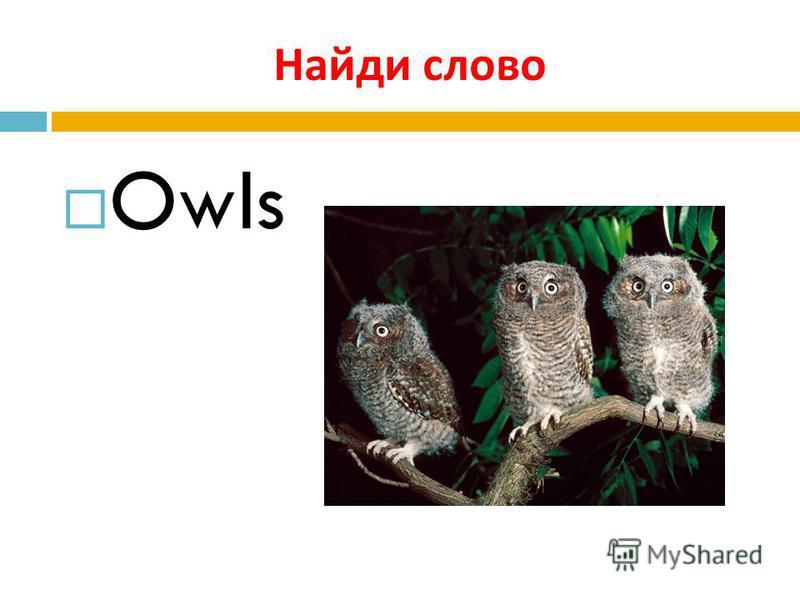 Найди слово Owls
