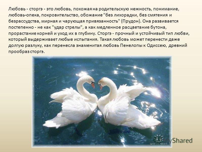 Любовь - сторгэ - это любовь, похожая на родительскую нежность, понимание, любовь-опека, покровительство, обожание