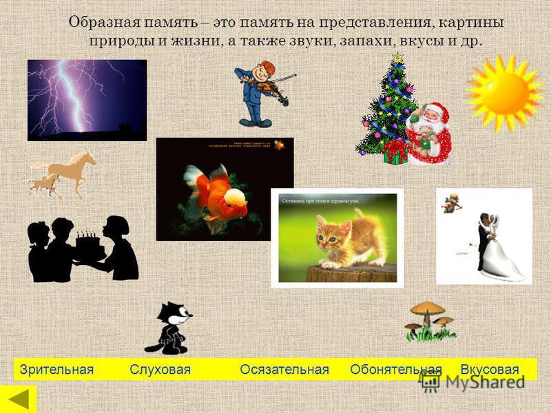 Образная память – это память на представления, картины природы и жизни, а также звуки, запахи, вкусы и др. Зрительная СлуховаяОсязательная Обонятельная Вкусовая