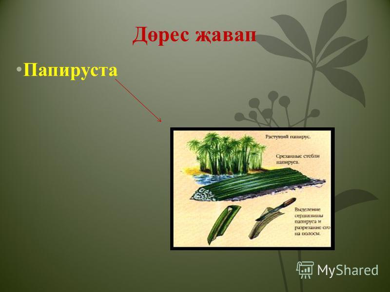 Дөрес җавап Папируста