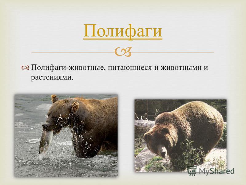 Полифаги - животные, питающиеся и животными и растениями. Полифаги