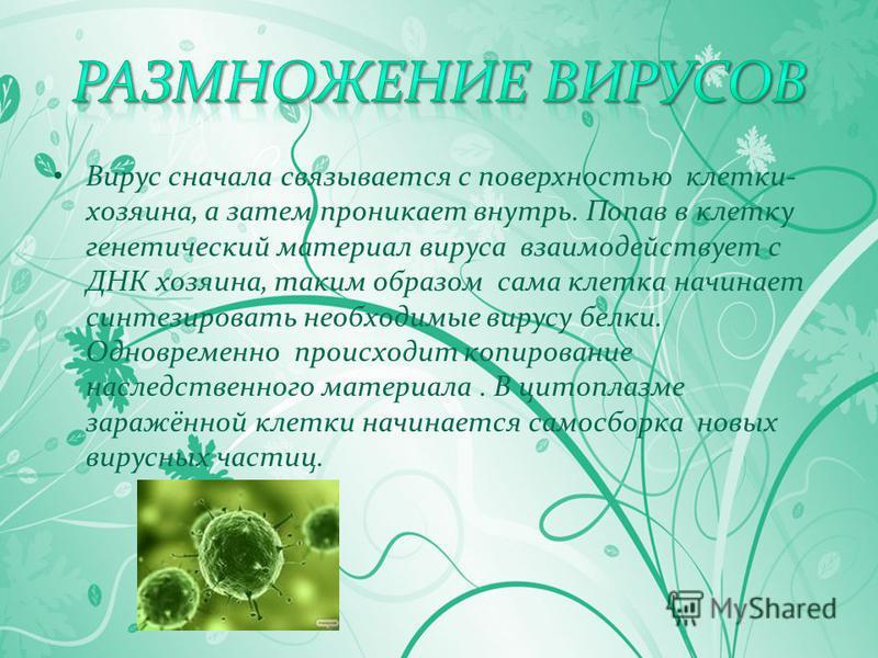 Вирус сначала связывается с поверхностью клетки- хозяина, а затем проникает внутрь. Попав в клетку генетический материал вируса взаимодействует с ДНК хозяина, таким образом сама клетка начинает синтезировать необходимые вирусу белки. Одновременно про