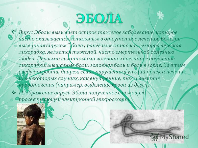 Вирус Эболы вызывает острое тяжелое заболевание, которое часто оказывается летальным в отсутствие лечения. Болезнь, вызванная вирусом Эбола, ранее известная как геморрагическая лихорадка, является тяжелой, часто смертельной болезнью людей. Первыми си