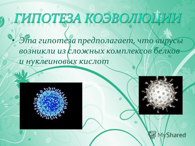 Эта гипотеза предполагает, что вирусы возникли из сложных комплексов белков и нуклеиновых кислот