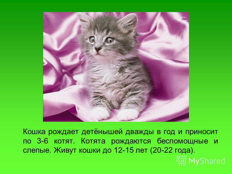 Кошка рождает детёнышей дважды в год и приносит по 3-6 котят. Котята рождаются беспомощные и слепые. Живут кошки до 12-15 лет (20-22 года).