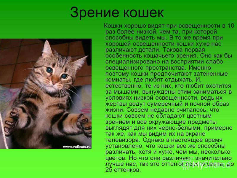 Зрение кошек Кошки хорошо видят при освещенности в 10 раз более низкой, чем та, при которой способны видеть мы. В то же время при хорошей освещенности кошки хуже нас различают детали. Такова первая особенность кошачьего зрения. Оно как бы специализир