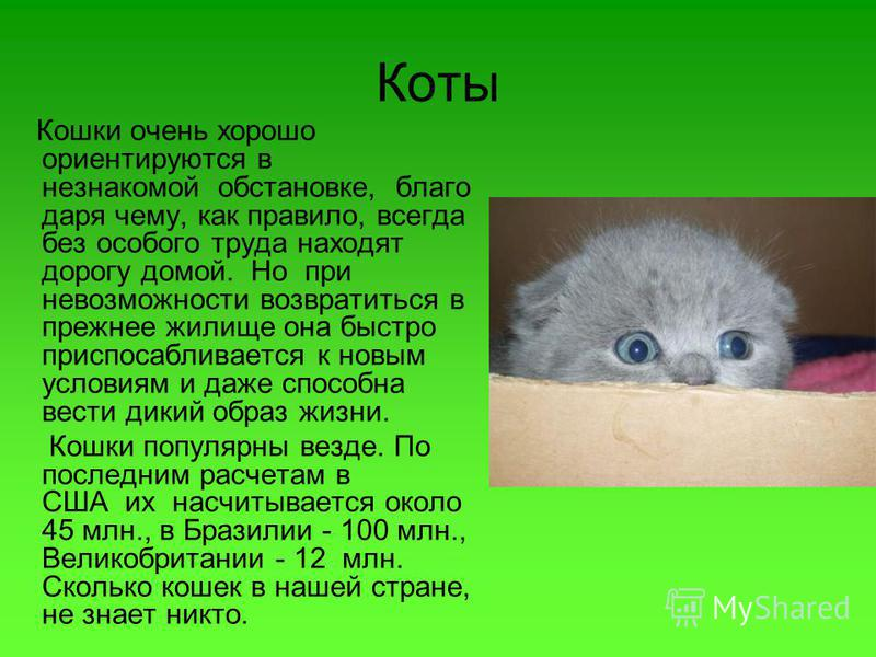 Коты Кошки очень хорошо ориентируются в незнакомой обстановке, благо даря чему, как правило, всегда без особого труда находят дорогу домой. Но при невозможности возвратиться в прежнее жилище она быстро приспосабливается к новым условиям и даже способ