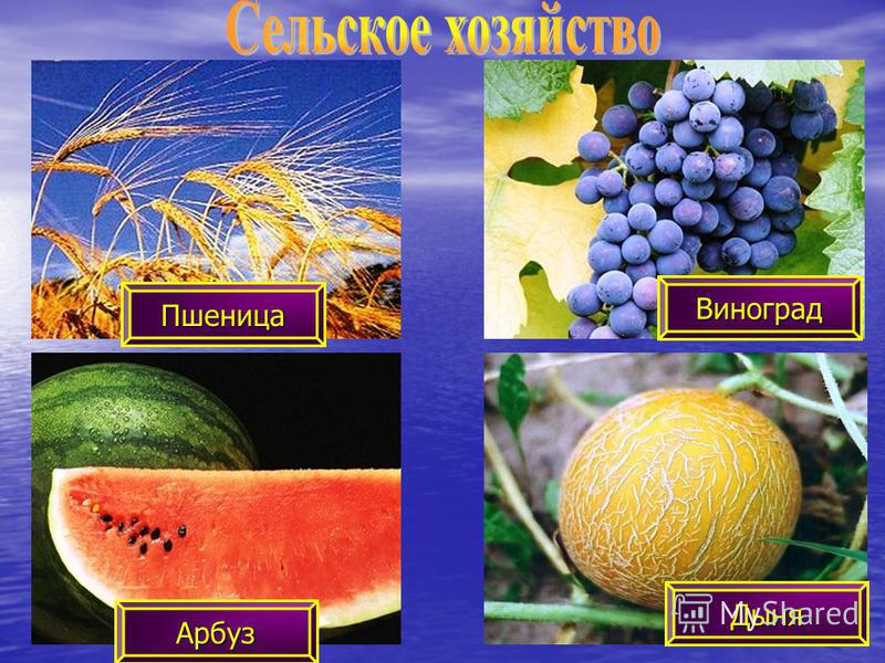 Пшеница Дыня Арбуз Виноград