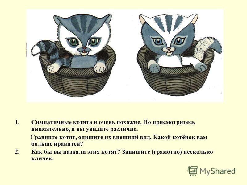 1. Симпатичные котята и очень похожие. Но присмотритесь внимательно, и вы увидите различие. Сравните котят, опишите их внешний вид. Какой котёнок вам больше нравится? 2. Как бы вы назвали этих котят? Запишите (грамотно) несколько кличек.